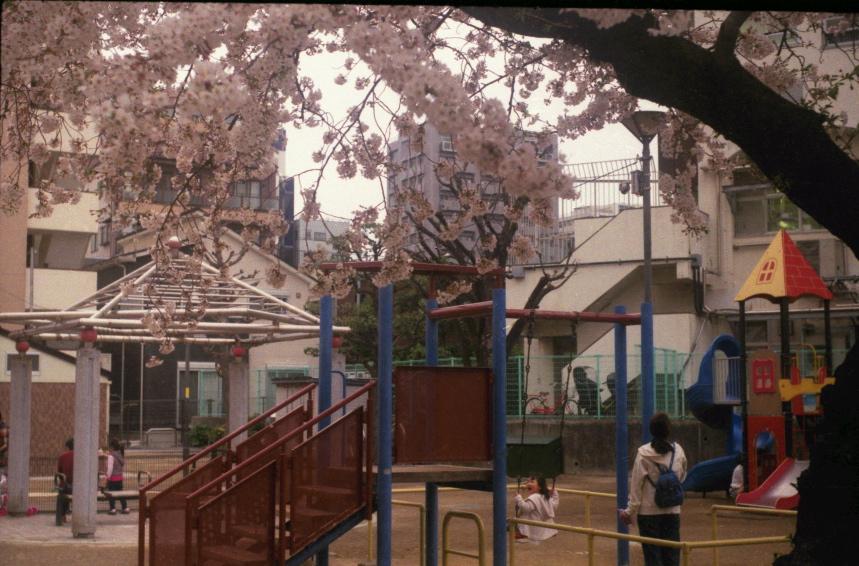 雪に降られても三ノ輪の桜は散らなかった